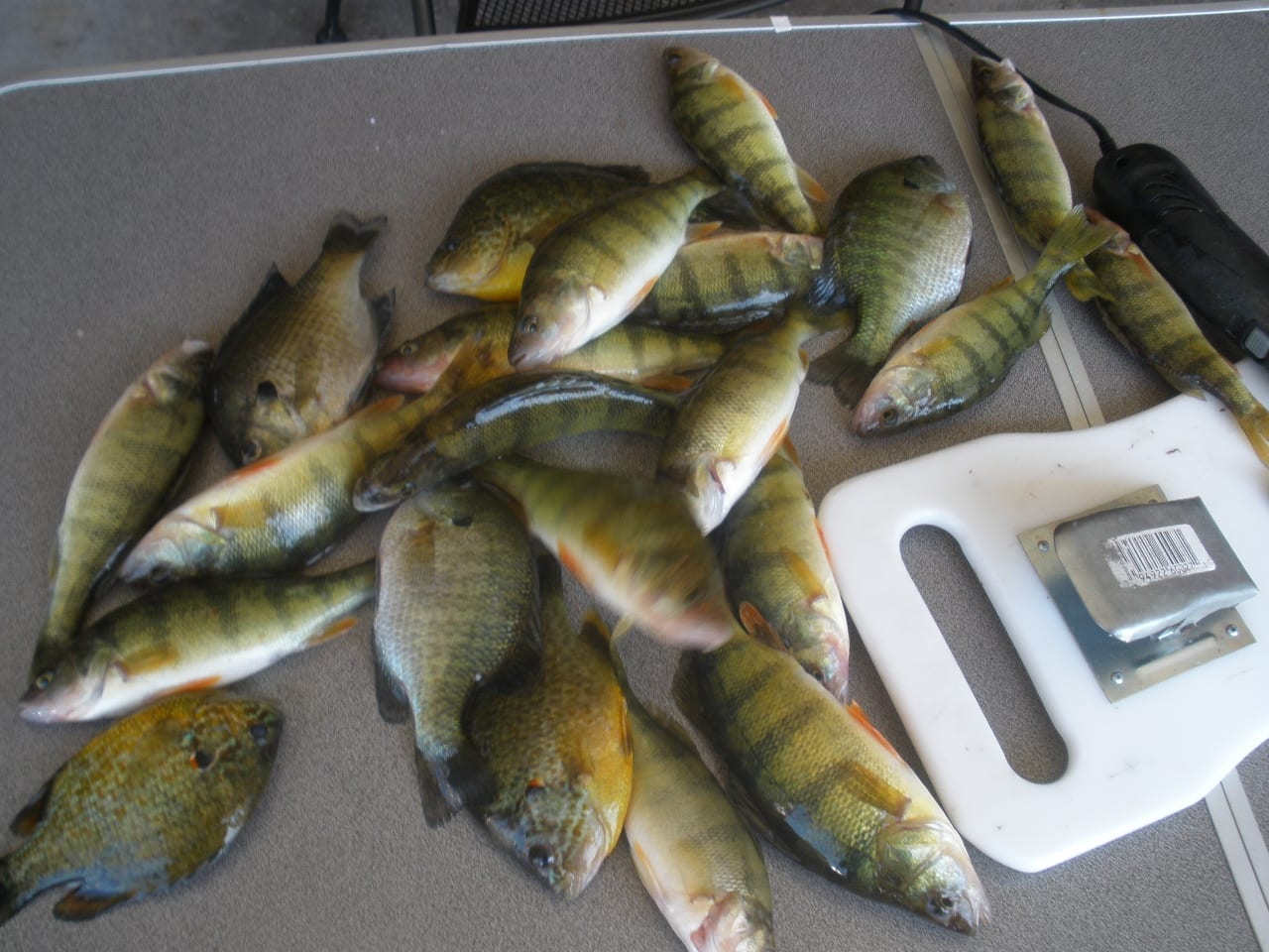 Attracting perch tips and tricks of the old timers my for Yellow perch fishing secrets